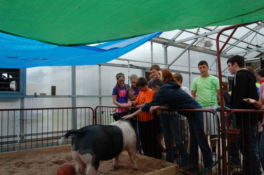 Mr. Wyatt's 3rd period class goes out and checks on the pig named Boots.