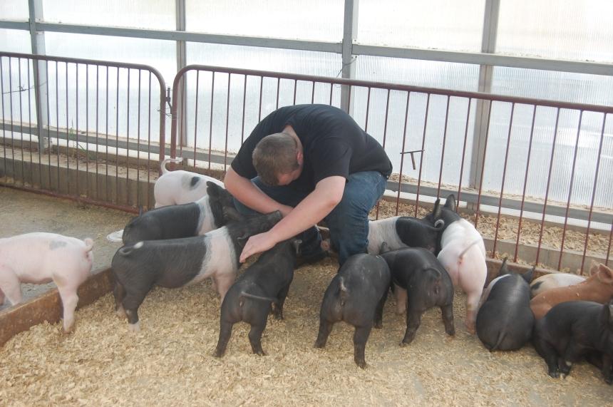PigPics1