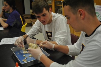 Sophomore Damon Ingle and freshmen Jace Ingle, dissecting a heart in anatomy class.